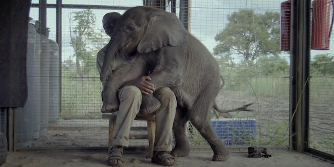 naledi beby elephant documentary