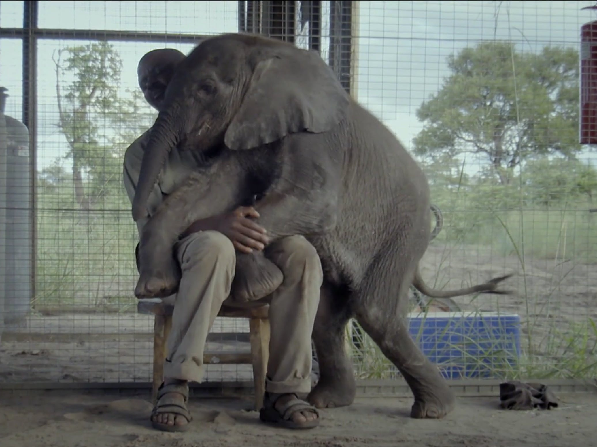 dont leave an elephant to go and chase a bird