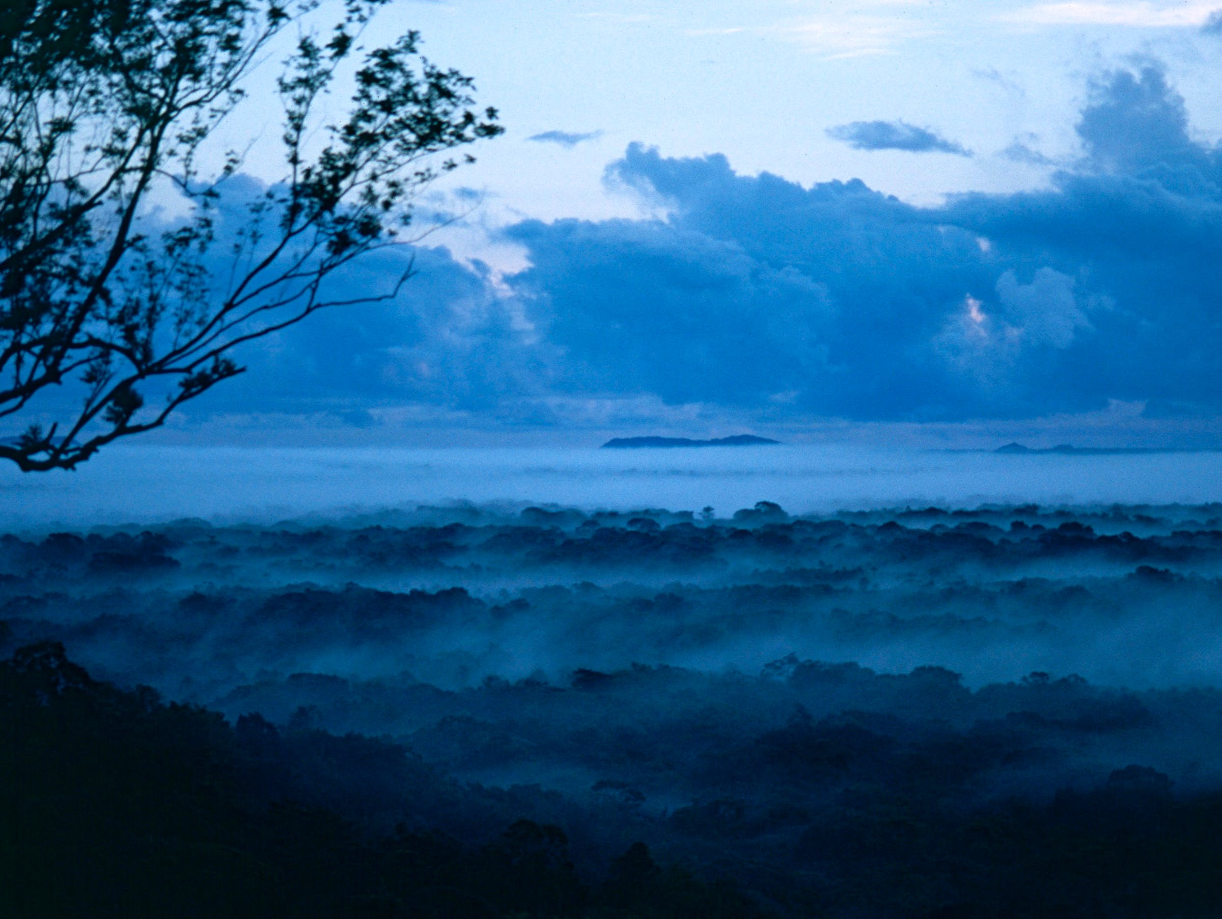 Morning Mist over the Jungle