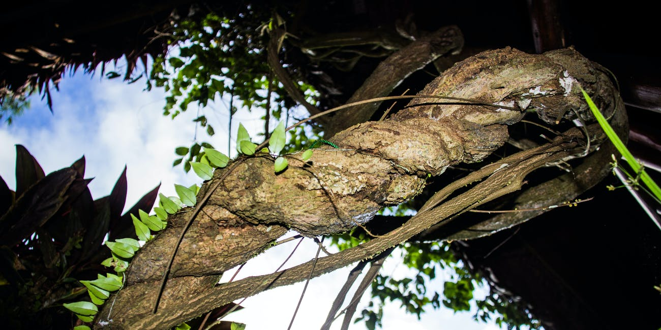 On Finding Ayahuasca and Taking the Psychedelic Drug for the