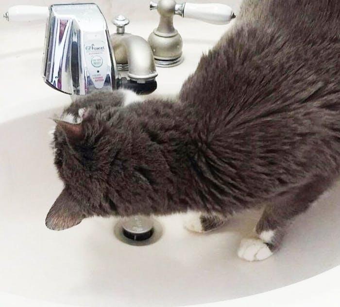 smart home pets, faucet sensor, cat water fountain, cat drinking fountain