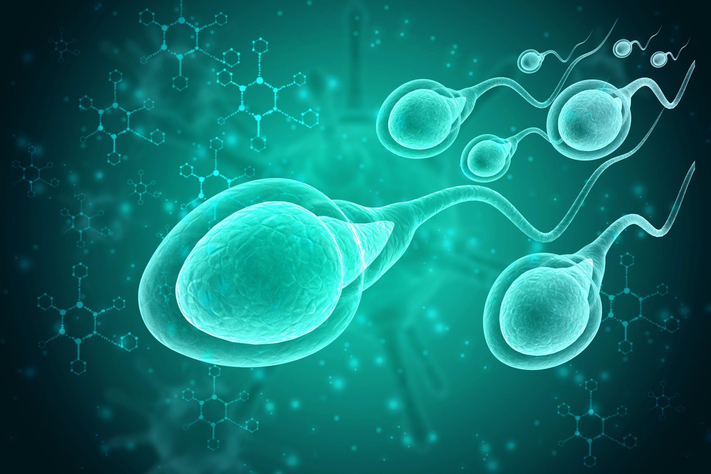 sperm, birth control