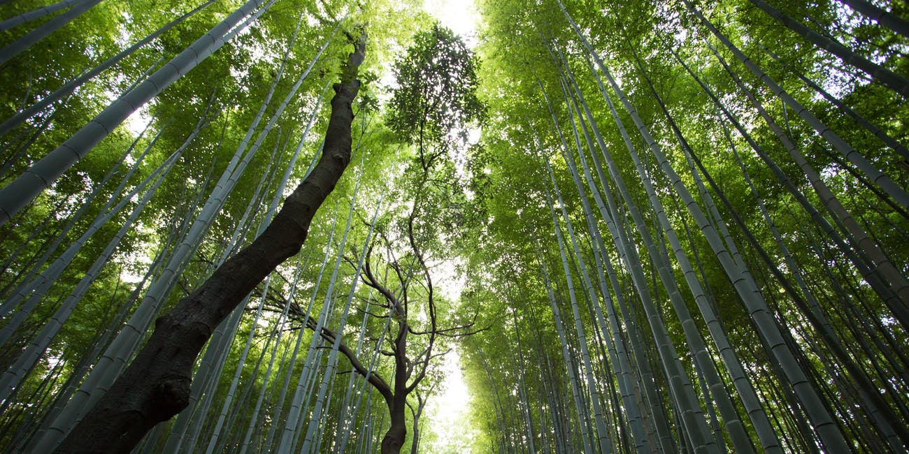 trees and bamboo