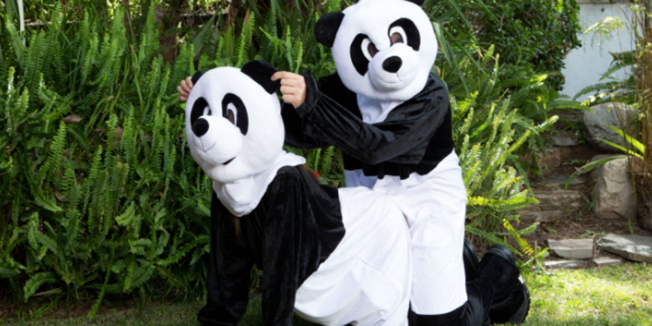 Pandas will be put into the mood by humans dressed as pandas.