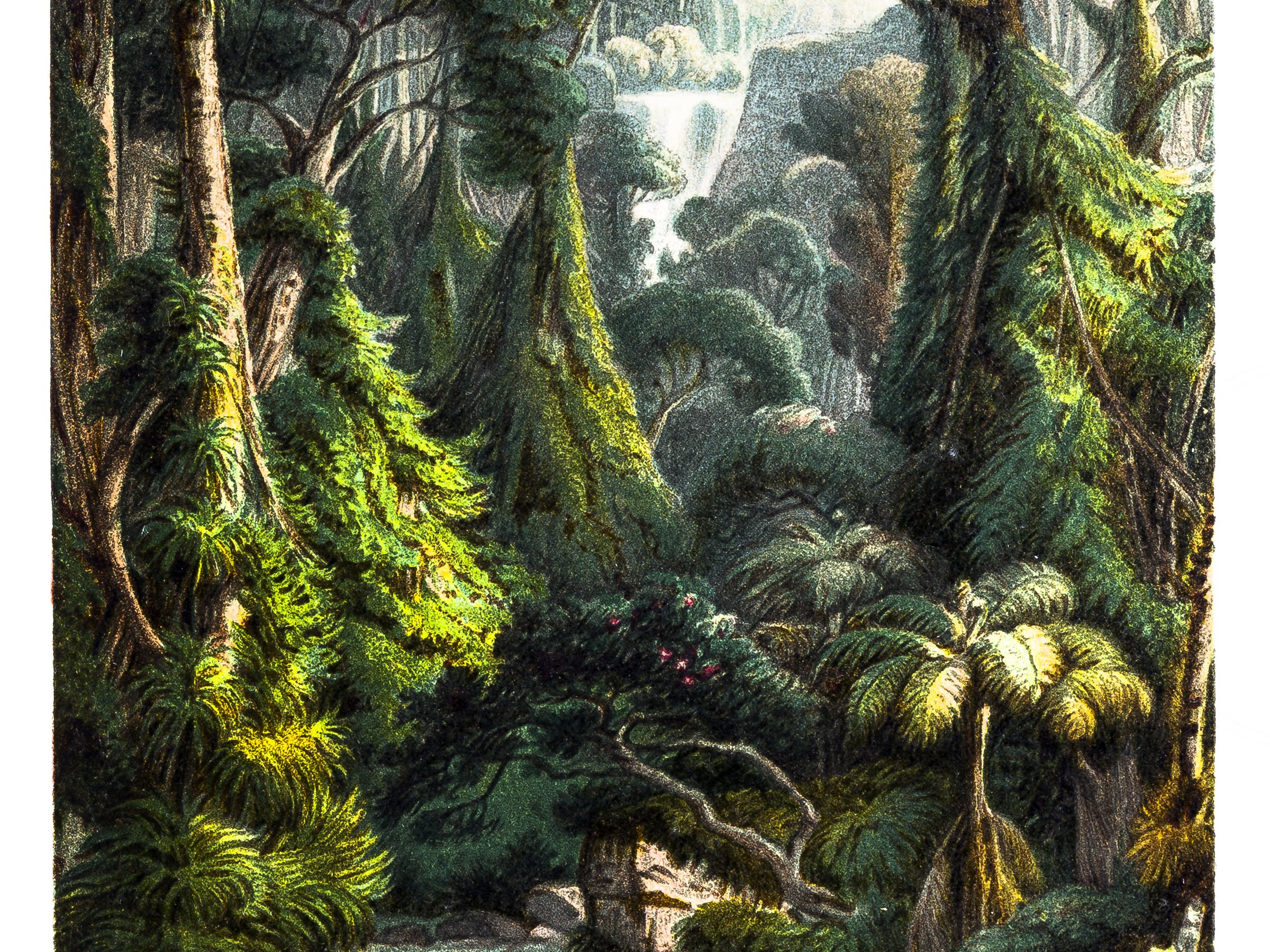 Tropical jungle Waterfall with Palm Trees ,Ferns and Lianas