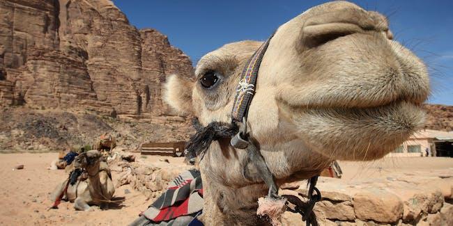 camel sex clips