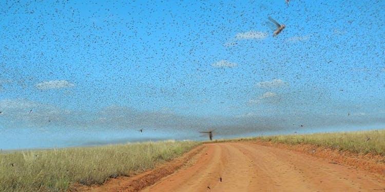 Inverse Daily Grasshopper Swarm Descends Upon Las Vegas