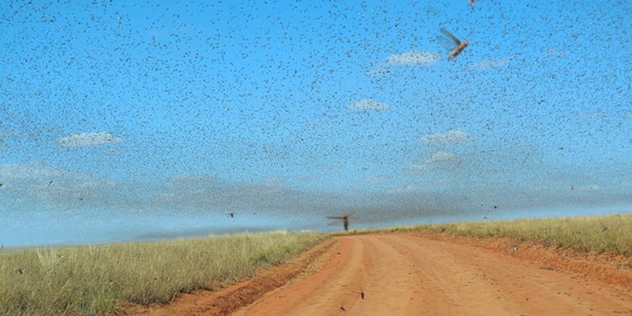 Inverse Daily: Grasshopper Swarm Descends Upon Las Vegas