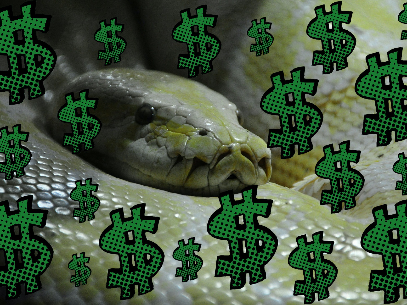 WHAT TO KNOW NOW | Python
