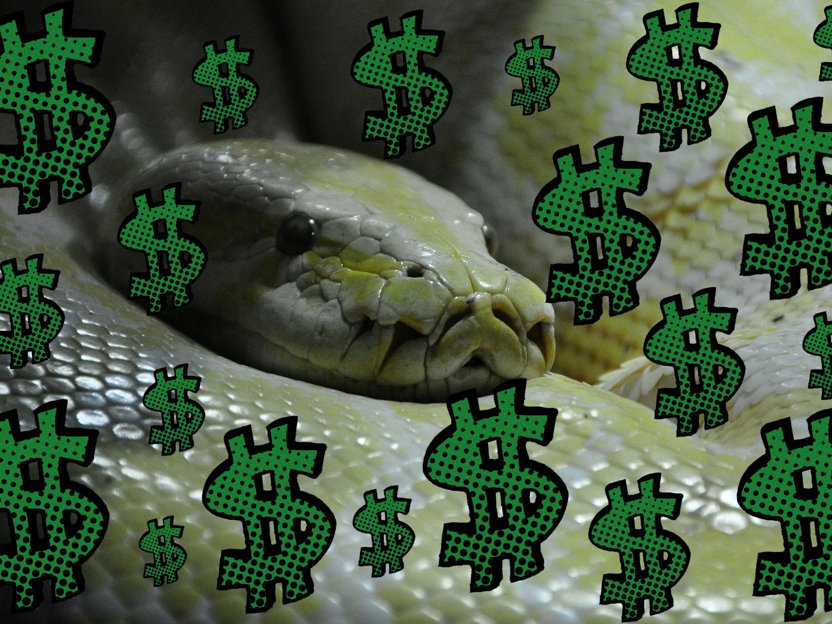 Python makes you money. Pythons make you excrement.