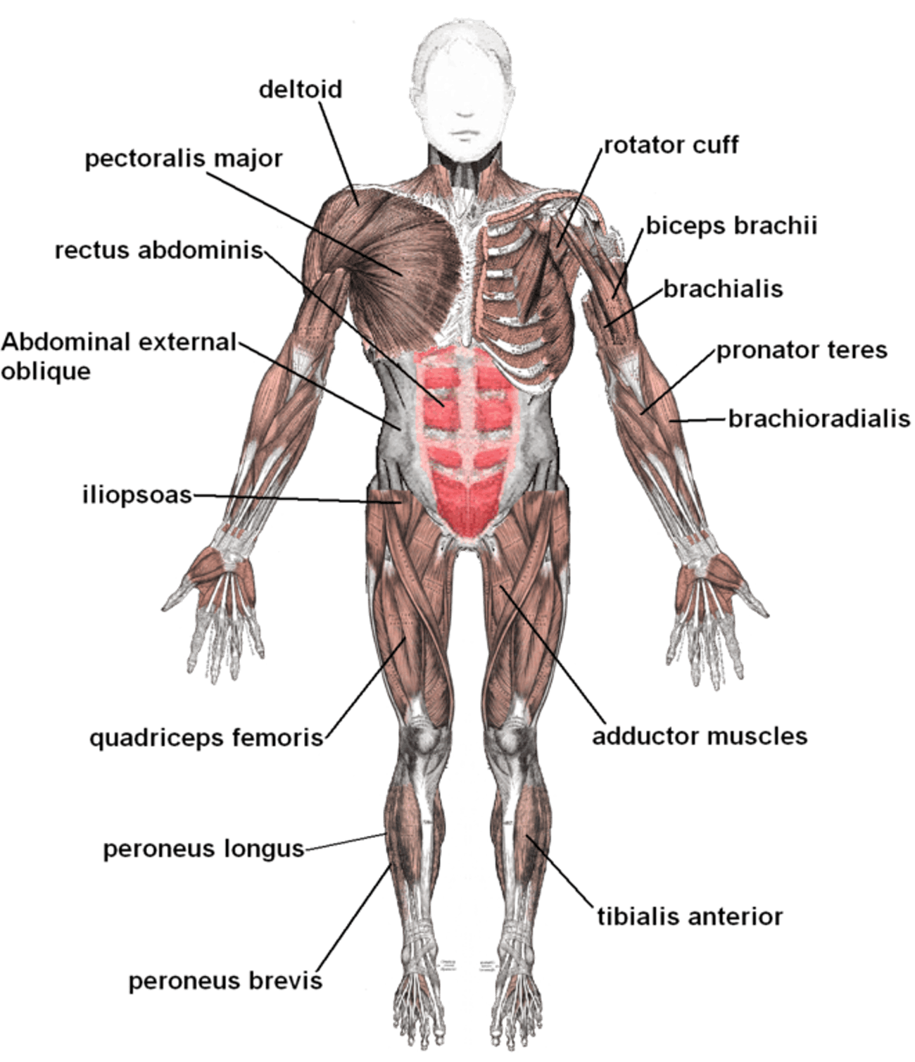 Rafael Nadal Injury Update What Is A Strained Iliopsoas Muscle