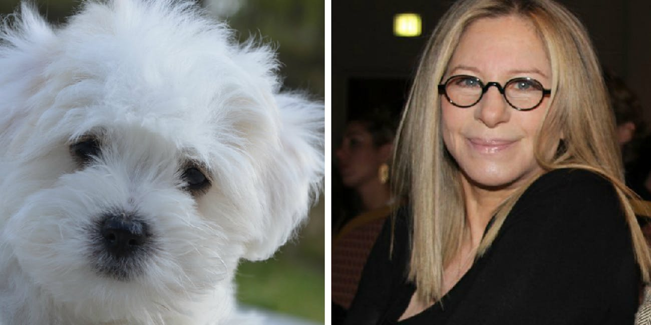cloned dogs, Barbara Streisand