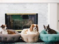 Best Friends by Sheri OrthoComfort Deep Dish Cuddler