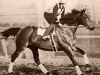 seabiscuit workout