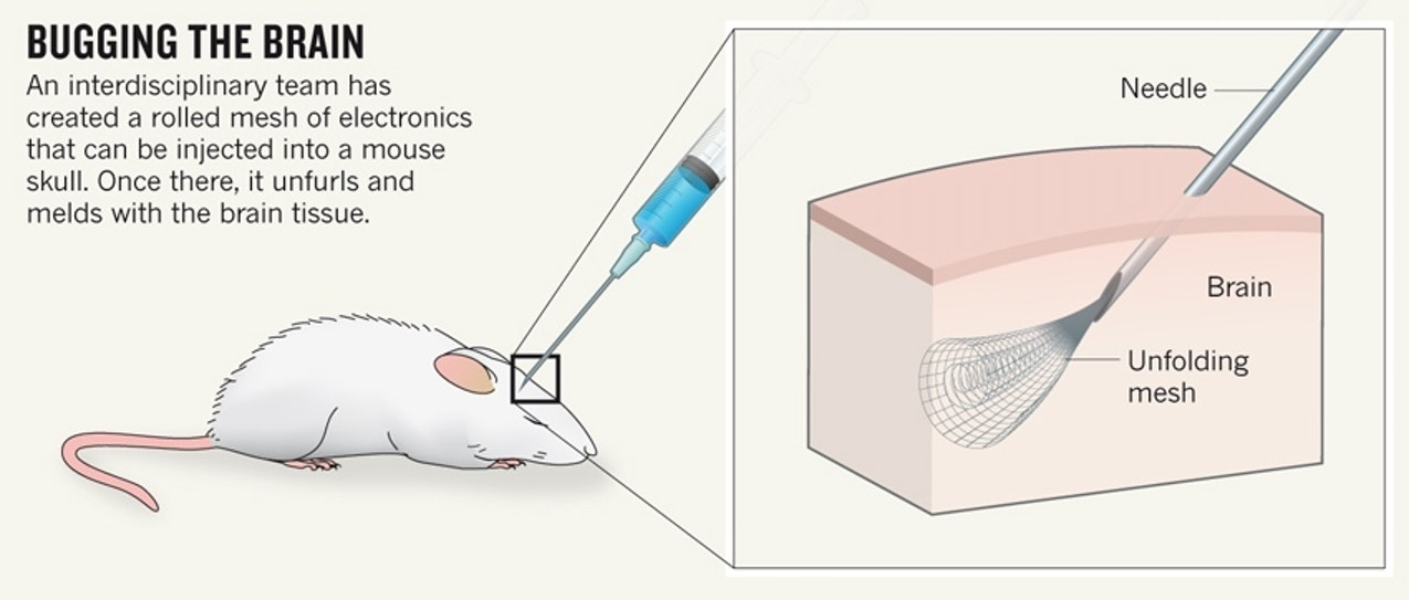 Researchers illustrate how neural mesh was injected into mice.