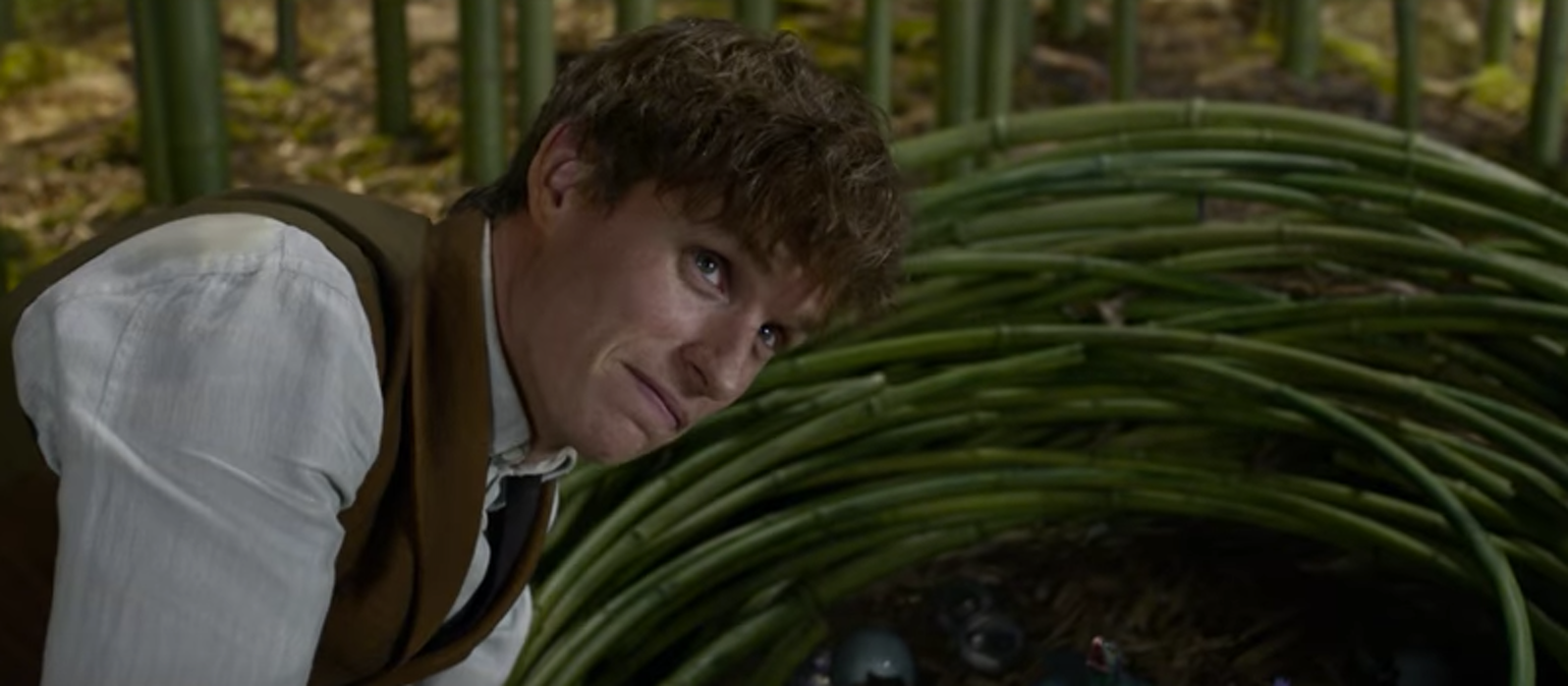 Are these Jobberknolls in 'Fantastic Beasts and Where to Find Them'?