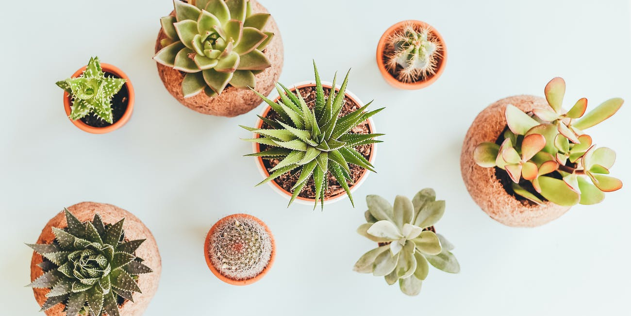 Indoor Plants Are Meaningful for 2 Life-Changing Reasons
