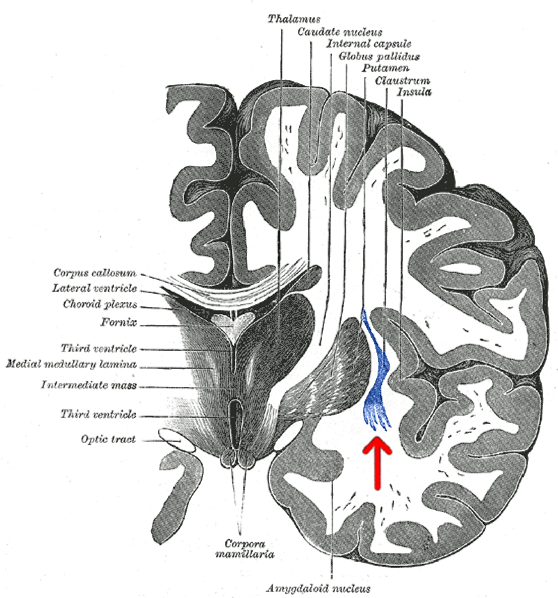 Discover This Forgotten Region of the Brain, According to a Neuroscientist