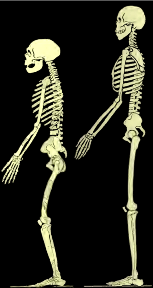 neanderthal posture boule
