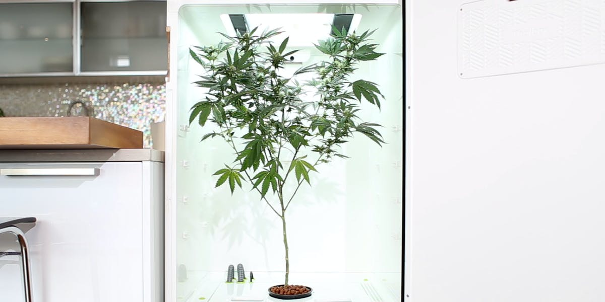 leaf grow fridge