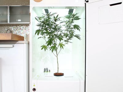 Grow Your Weed in This Automated Fridge