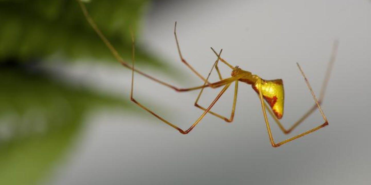 spider, evolution