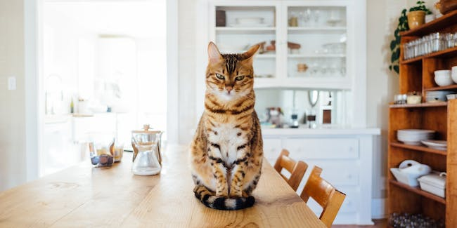 If you own a cat, you may have a parasite living inside you