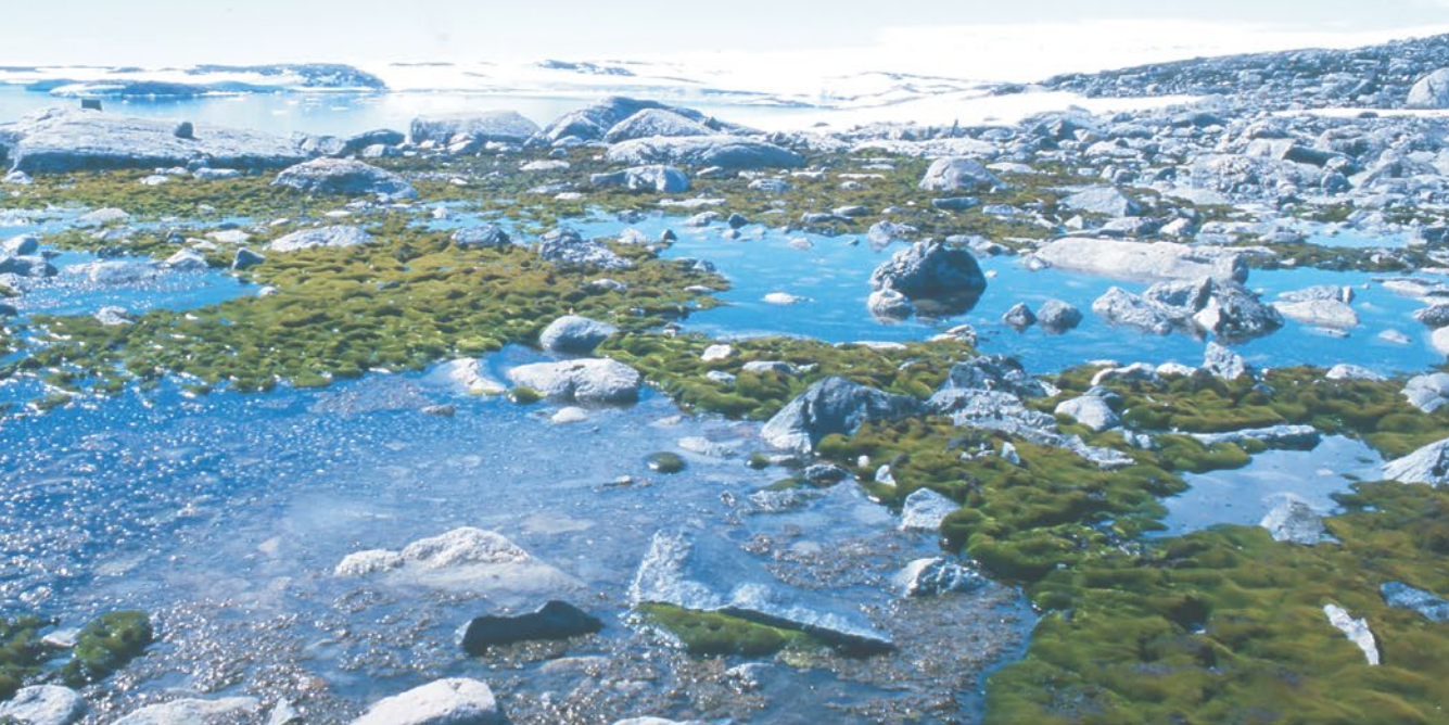 Antarctica's Rapidly Changing Plants Reveal New Frontier of Climate Change