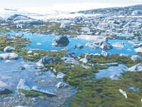 This 1999 photo shows a periodic flooding event of moss beds. They no longer experience this level of flooding, though, resulting in lowered abundance of certain mosses.