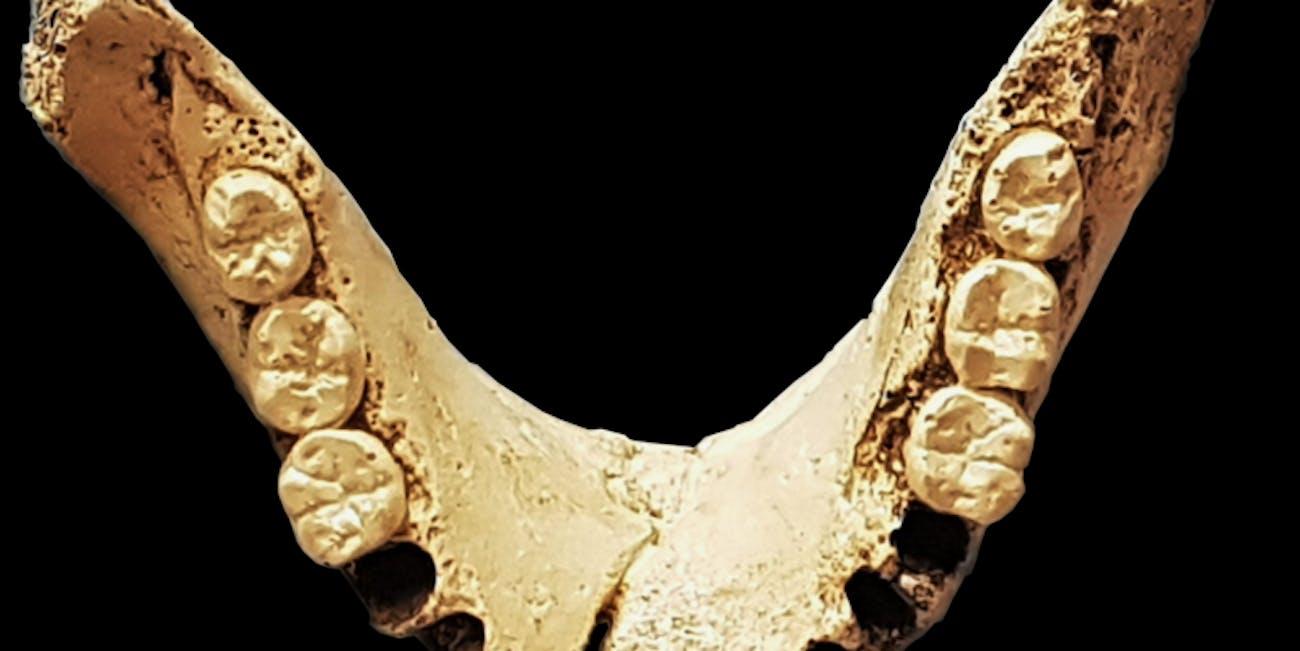 ancient teeth, jaw bone, Sima de los Huesos