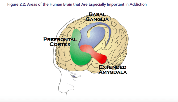 Regions of the brain are affected differently by alcohol.