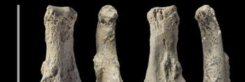 Ancient finger bones
