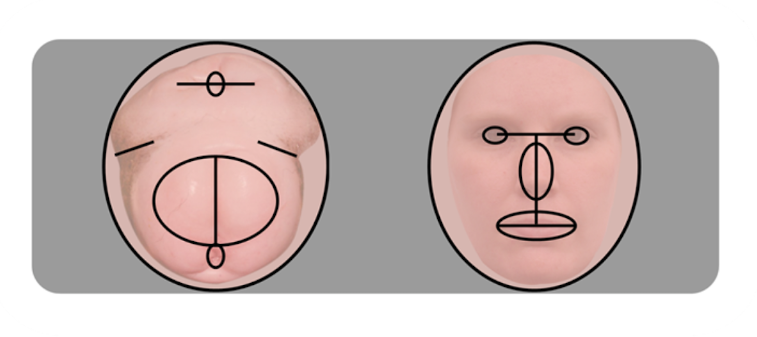 Chimp butts (left) and human faces (right): Not that different.