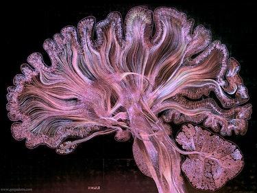 Neuralink: Elon Musk Finally Reveals His Neural Lace Plan