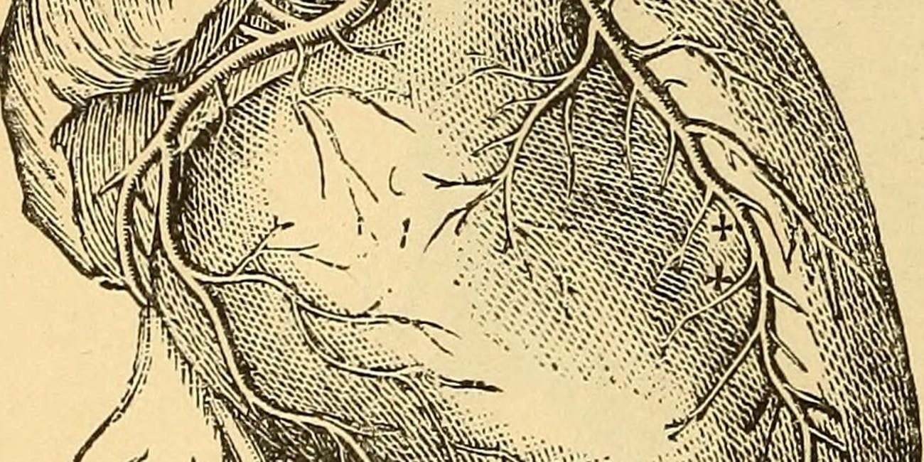"Image from page 115 of ""Anatomy, physiology and hygiene"" (1890)"