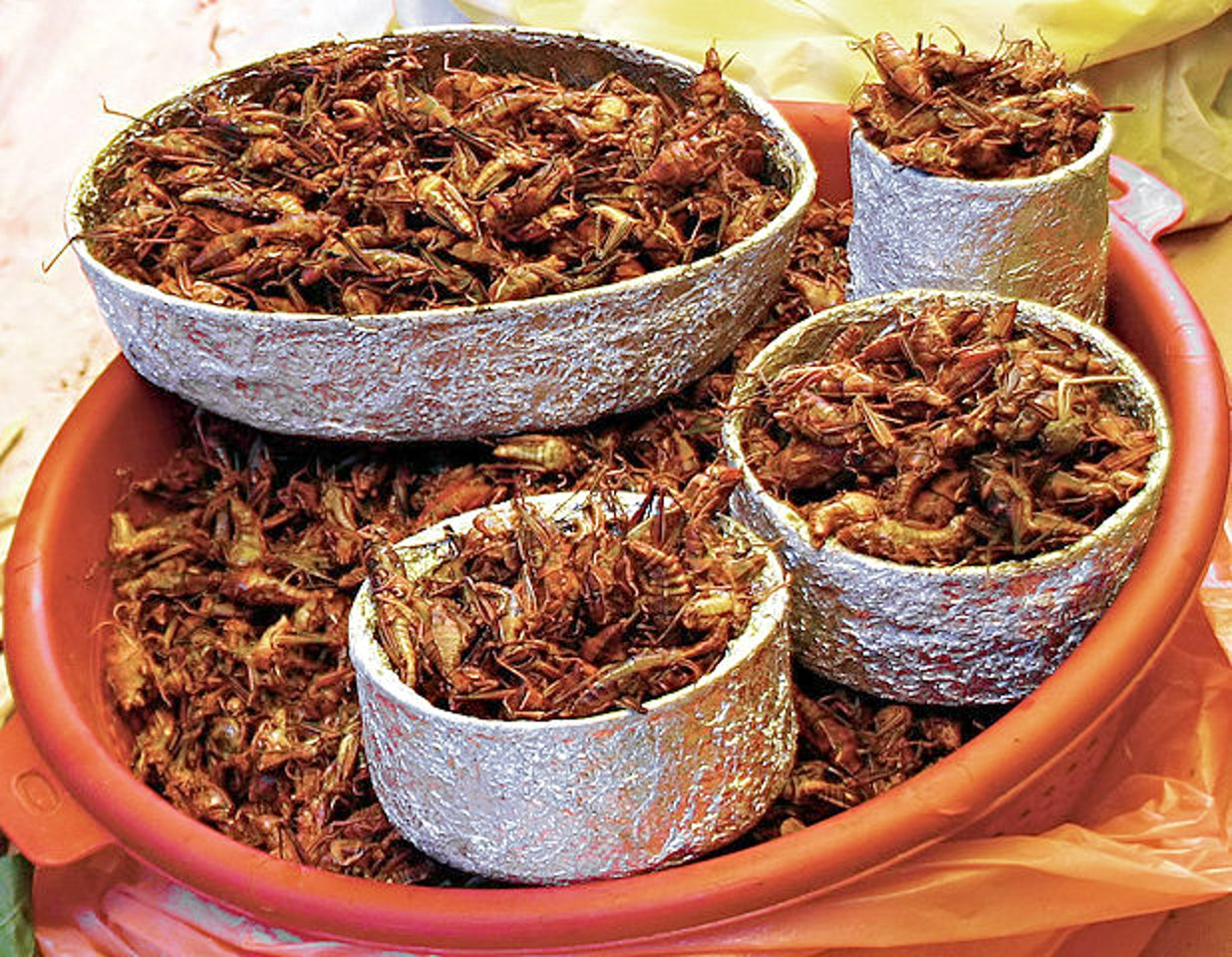 A basket of chapulines aka roasted crickets.