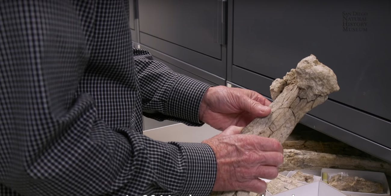 In November 1992, paleontologists from the San Diego Natural History Museum were conducting routine monitoring of a construction site on State Route 54 here in San Diego, when field paleontologist Richard Cerutti spotted several fossil bones and portions of a tusk. It took 22 years to piece the story of these fossils together. And the picture it reveals just might change everything.