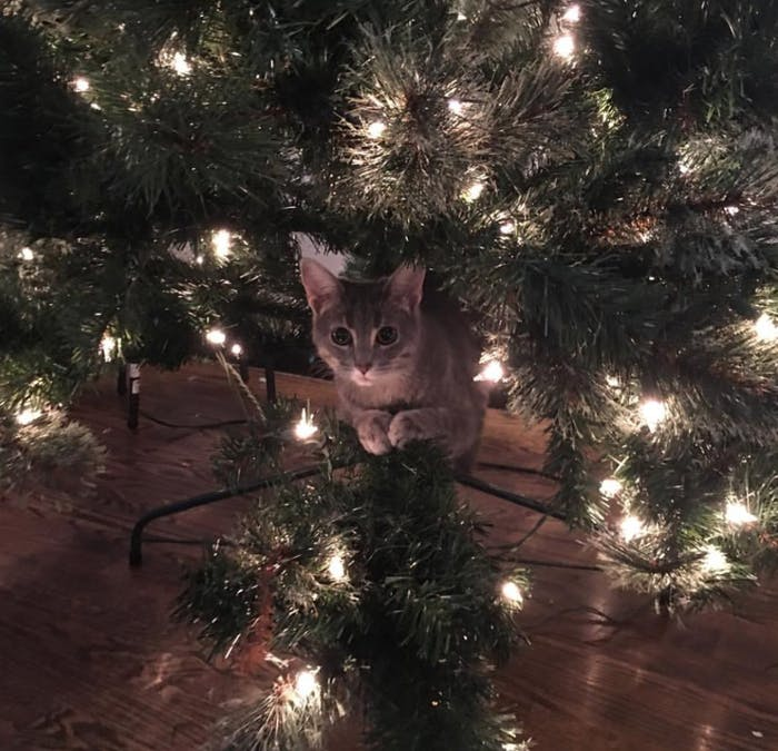 Are Christmas Trees Bad For Cats: Why Do Cats Like Christmas Trees? A Scientist Explains