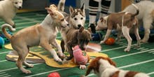 Science Explains Why the Puppy Bowl Is a Perfectly Legit Super Bowl Tradition