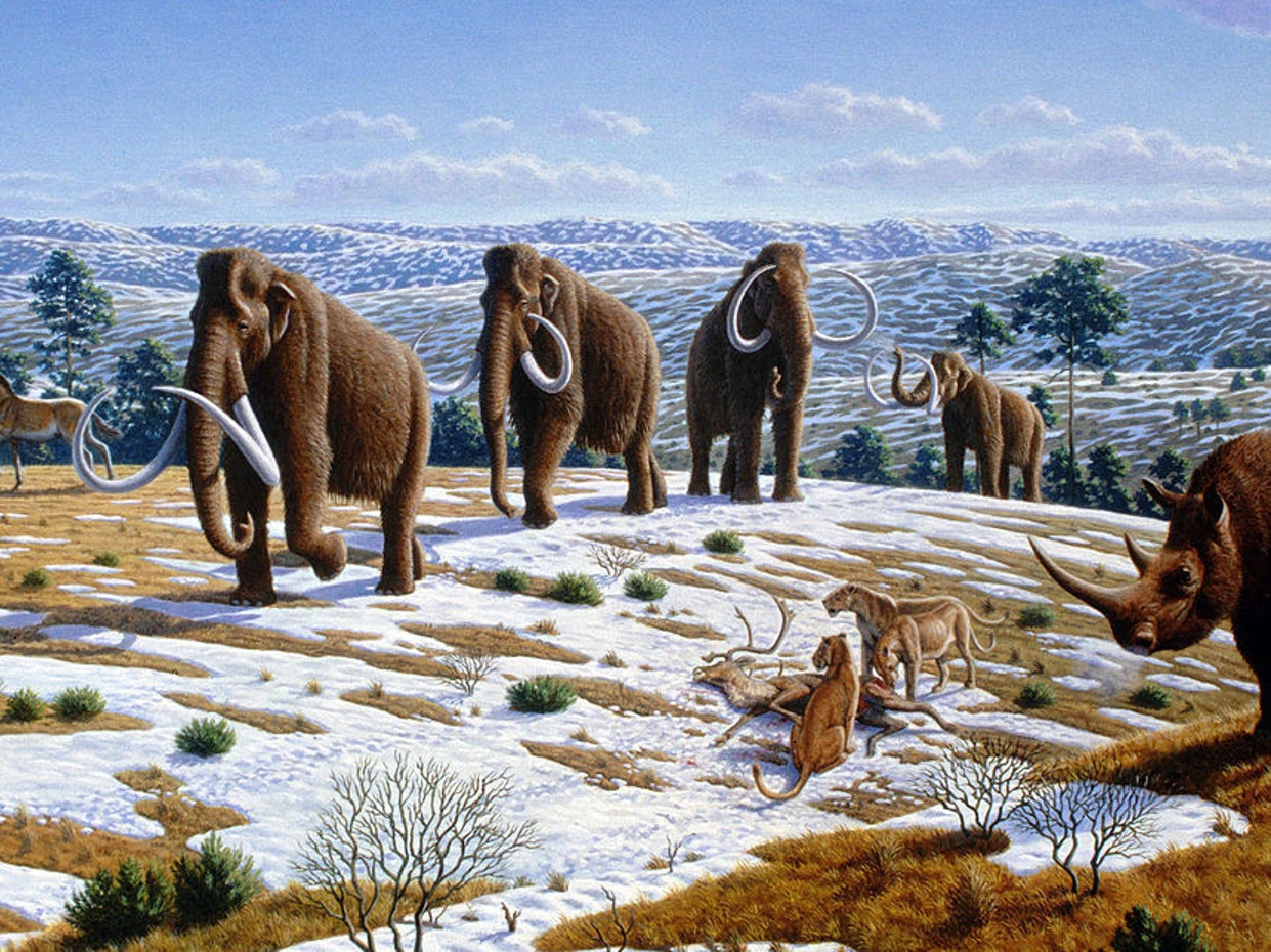 Ice age fauna of northern Spain