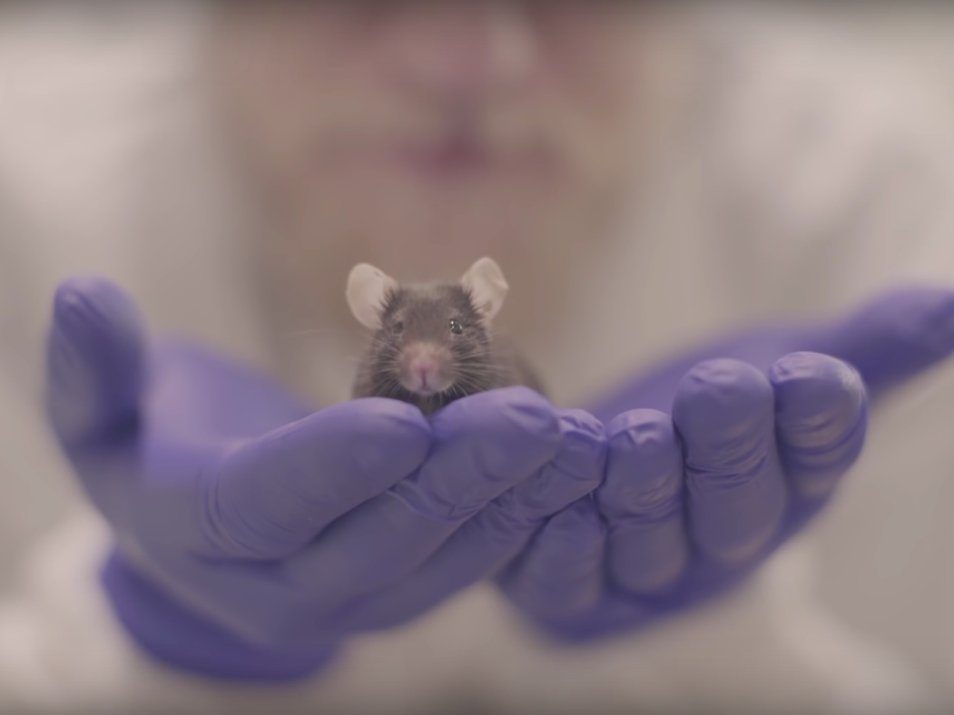 A mouse might hold big secrets in its tiny head.