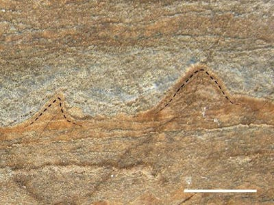 Scientists Just Found the Oldest Fossils of Life on Earth