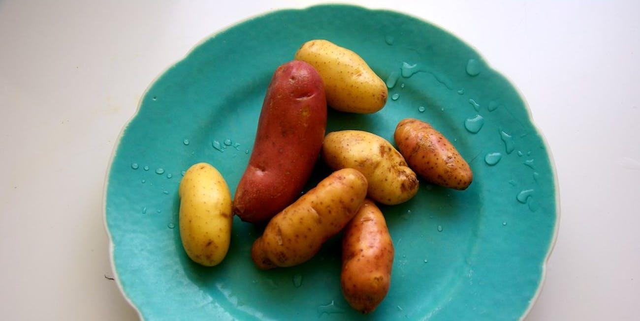 Fingerling Potatoes
