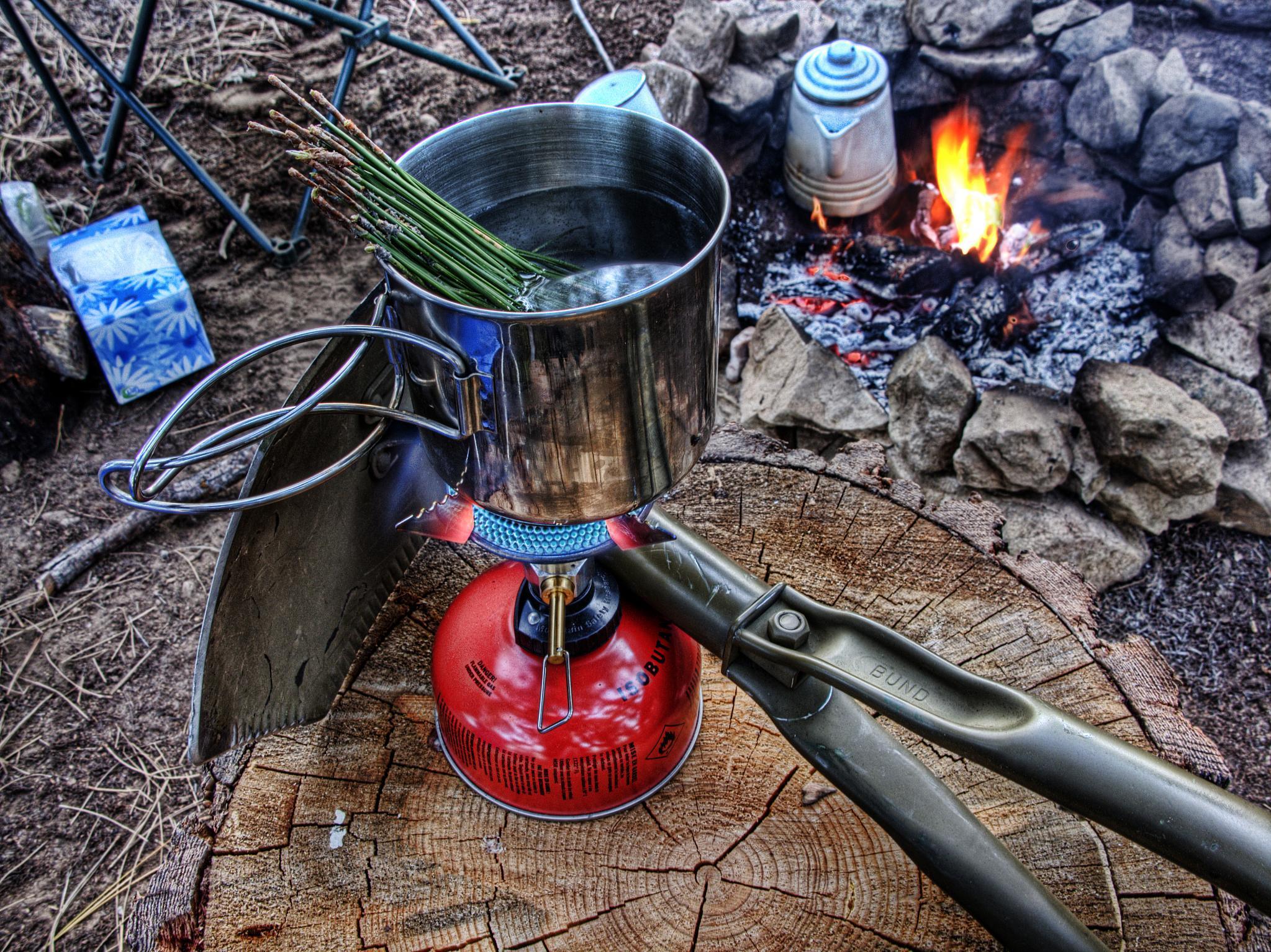 A brew of pine needle tea.