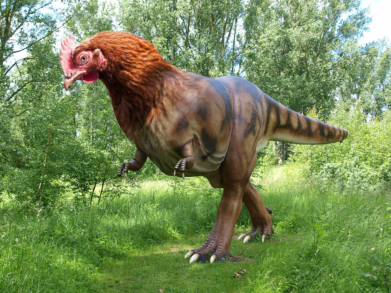 scientists are reverse engineering a dinosaur from a chicken inverse