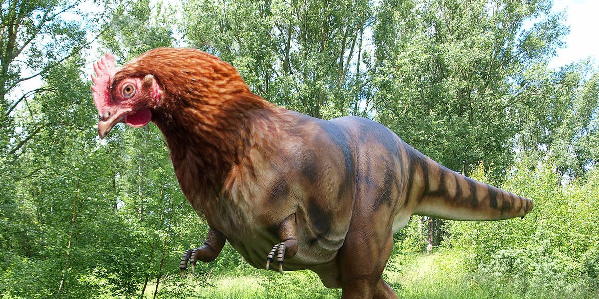 dinosaur chicken hybrid