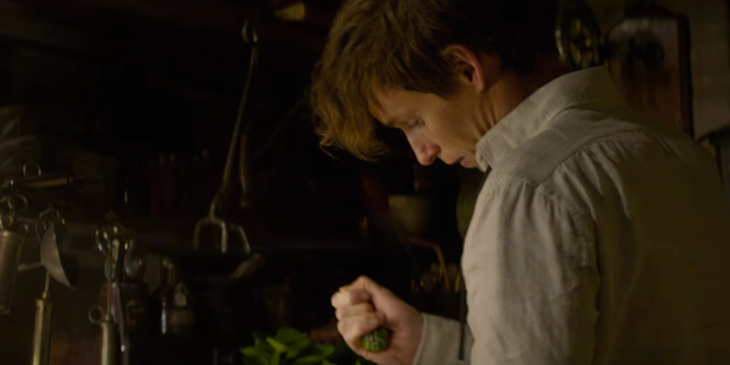 Newt Scamander in 'Fantastic Beasts and Where to Find Them'