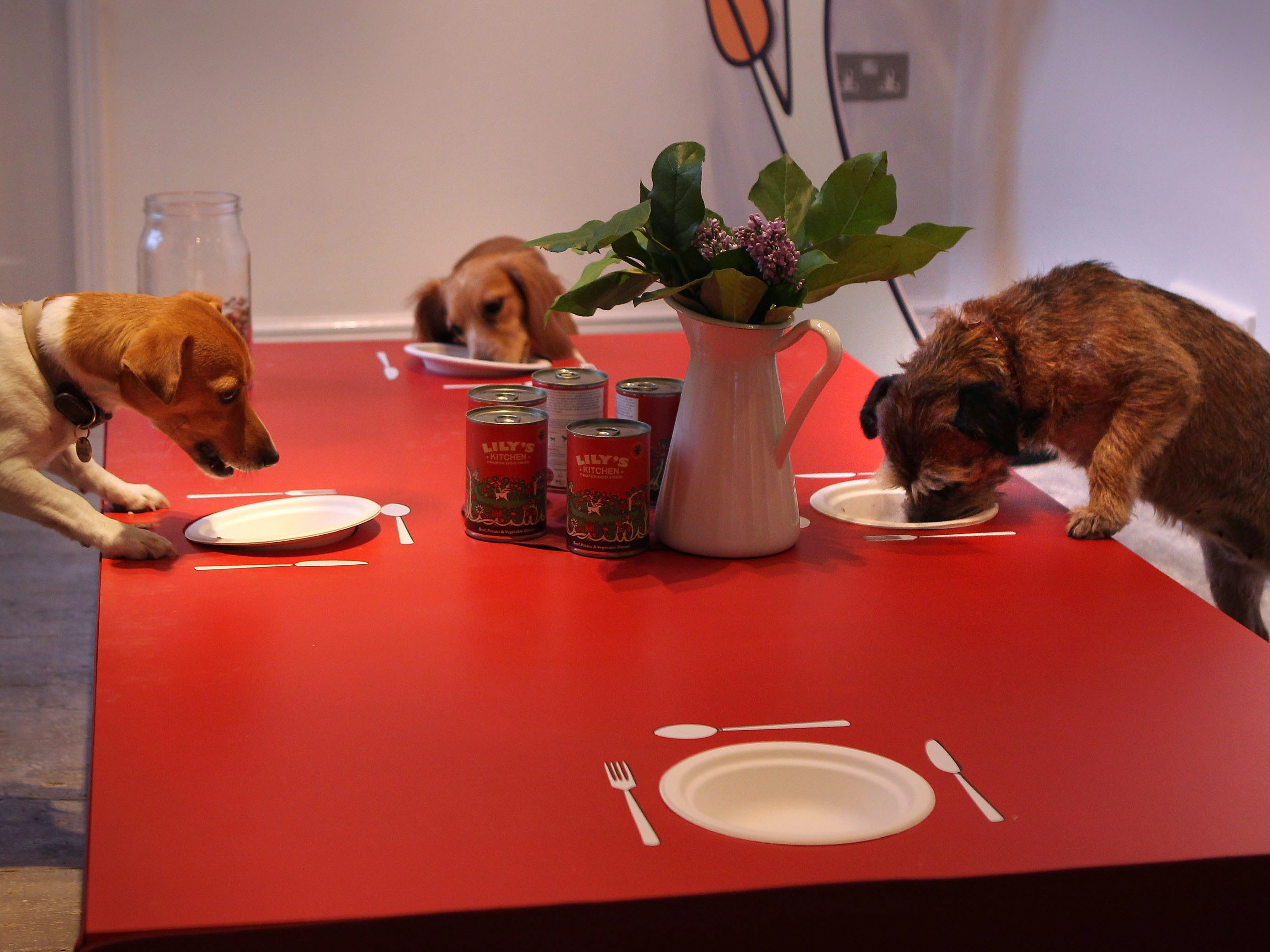 Don't Feed Your Dog Thanksgiving Leftovers Unless You Really Fucking Hate It