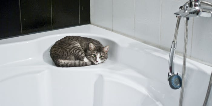 The Scientific Reason Your Cat Follows You Into The Bathroom