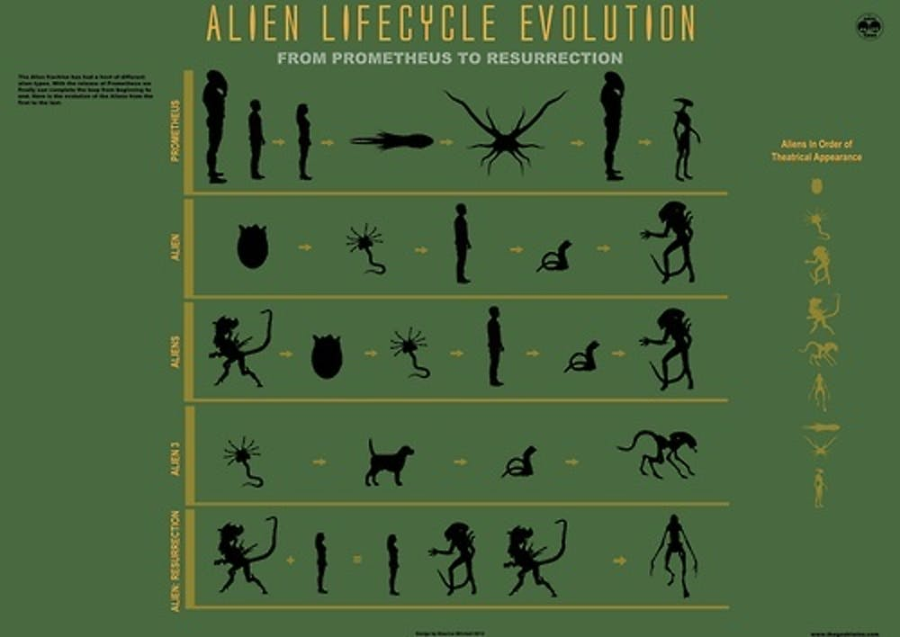 A fan's rendering of the xenomorph life cycle.